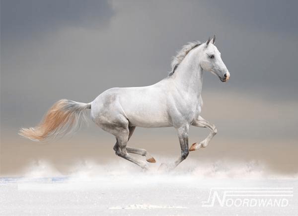 Foto behang Horsepower Noordwand