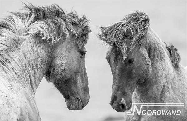 Foto behang grey Horses Noordwand
