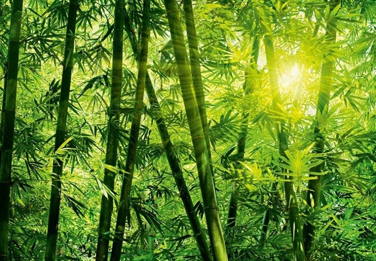 Foto behang Bamboo Forest 00123