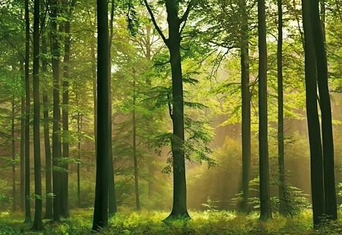 Foto behang Autumn Forest 00216