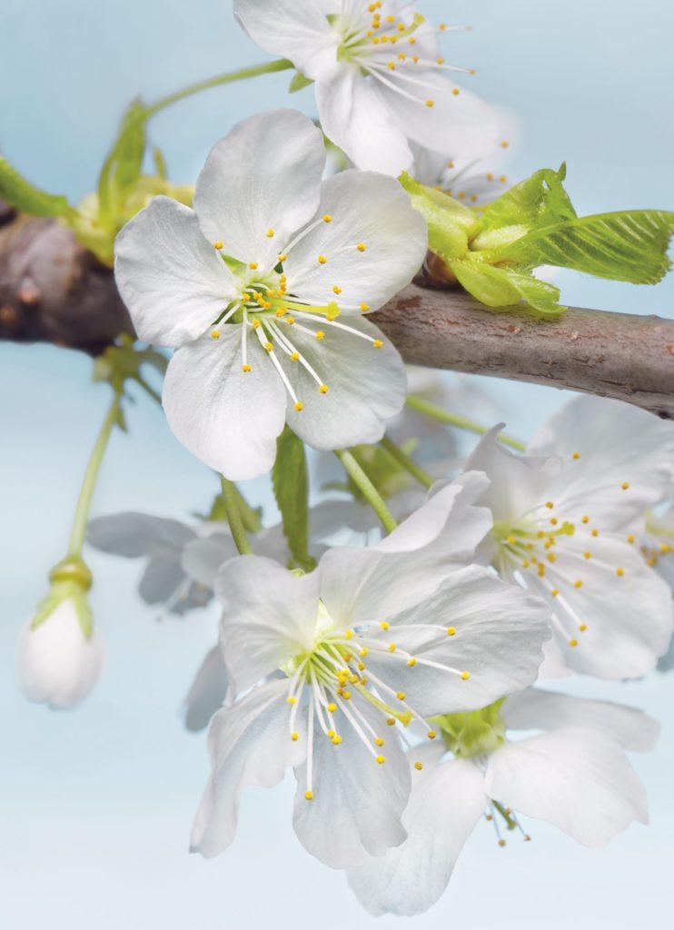 Foto behang Blossom xxl2-033