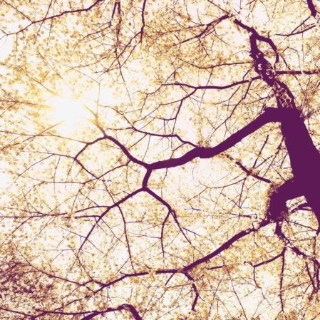 Foto behang Sunshine V5-752