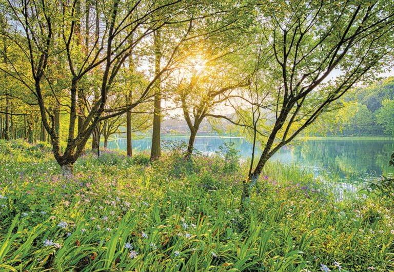 Foto behang Spring Lake 8-524