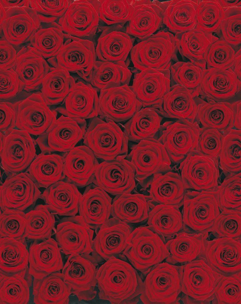 Foto behang Roses 4-077