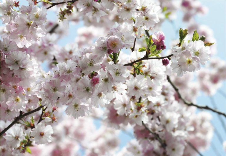Foto behang Spring 8NW-507