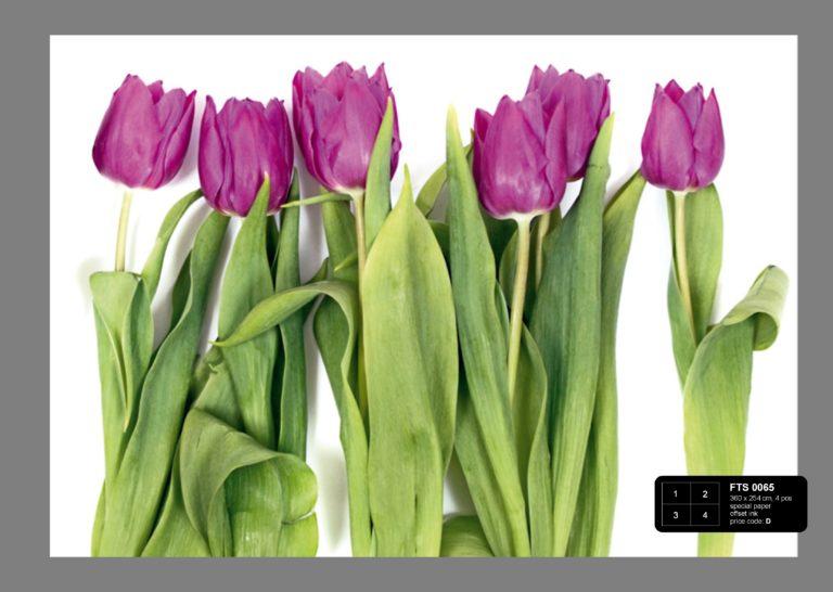 Foto behang Paarse Tulpen FTS0065