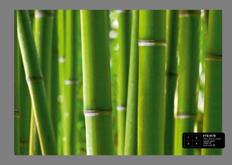 Foto behang Bamboe FTS0170