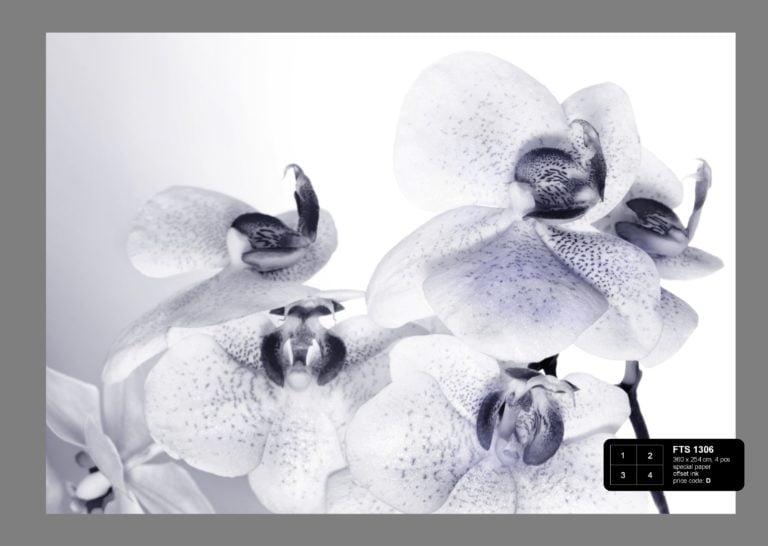 Foto behang Orchideeën FTS1306