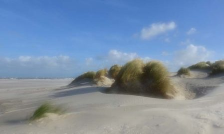 Foto behang Duinen Holland 0477