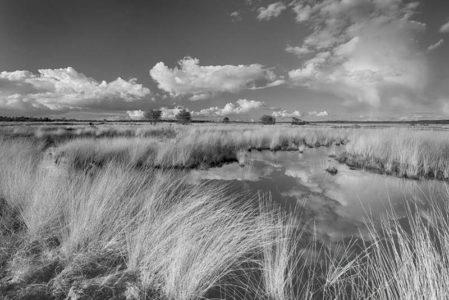 Foto behang Hoge Veluwe Holland 0693