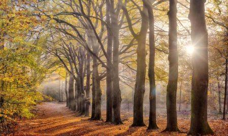 Foto behang Herfst Holland 2144