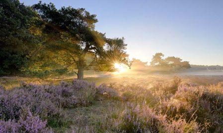 Foto behang Ederheide zonsopgang Holland 2152