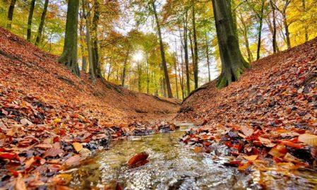 Foto behang Bos beek Herfst Holland 6604