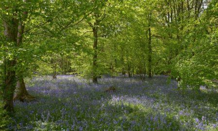 Foto behang Bos met blauwe lelies Holland 7659
