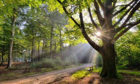 Foto behang Beukenboom met Bank Holland 9729