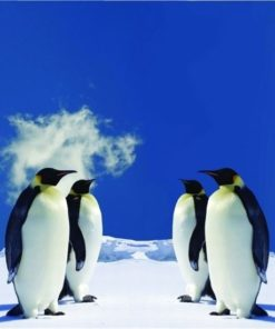 Foto behang 4 Pinguins 70014 Dutch Digiwall