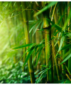 Fotobehang - jungle - bamboo-2