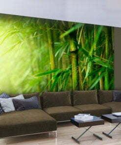 Fotobehang - jungle - bamboo-1