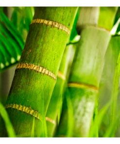 Fotobehang - bamboe - detail-2