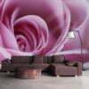 Fotobehang - Roze roos-1