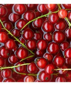 Fotobehang - Rode bessen gebaad in water-2