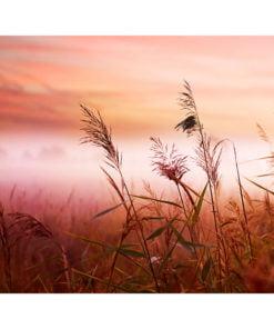 Fotobehang - Morning weide-2
