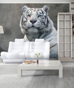 Fotobehang - Bengaalse tijger in dierentuin-1