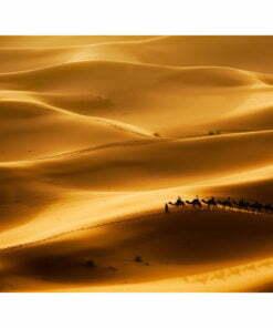Fotobehang - Caravan van kamelen-2
