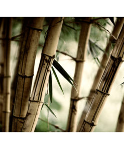 Fotobehang - Fog and bamboo forest-2
