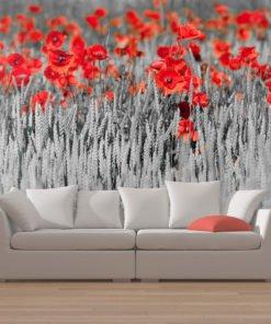 Fotobehang - Rode papavers op zwarte en witte achtergrond-1