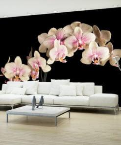 Fotobehang - Blooming orchidee-1