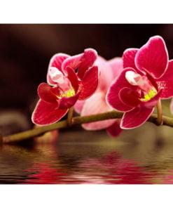 Fotobehang - Mooie orchidee bloemen op het water-2