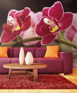 Fotobehang - Mooie orchidee bloemen op het water-1