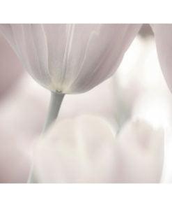 Fotobehang - Tulips fine art - black and white-2