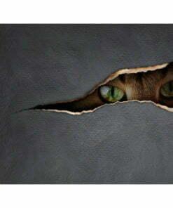 Fotobehang - Cat's blik-2
