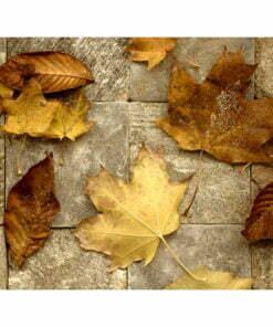Fotobehang - Voorbode van de herfst-2