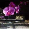 Fotobehang - Stylish Orchis-1