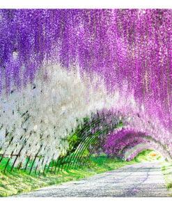 Fotobehang - Enchanted garden-2