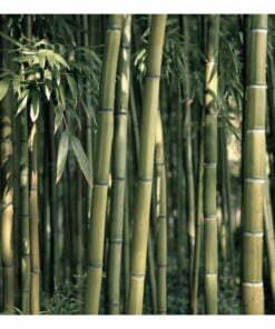 Fotobehang - Bamboo Exotic-2