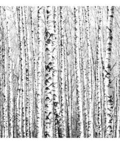 Fotobehang - Birch forest-2